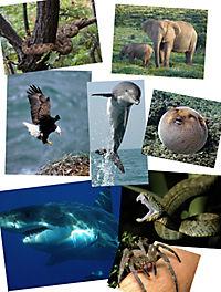 Tiere extrem - spannende Geschichten über die erstaunlichen Fähigkeiten der Tiere - Produktdetailbild 2