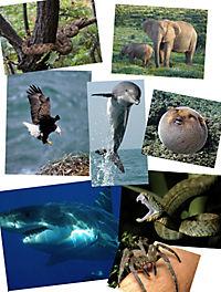 Tiere extrem - spannende Geschichten über die erstaunlichen Fähigkeiten der Tiere - Produktdetailbild 4