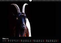 Tiere im Reich der Schatten (Wandkalender 2019 DIN A3 quer) - Produktdetailbild 3