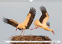 Tiere in Aktion (Wandkalender 2019 DIN A4 quer) - Produktdetailbild 3