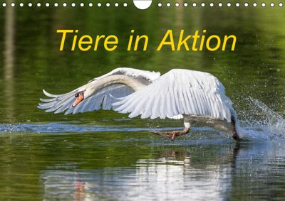 Tiere in Aktion (Wandkalender 2019 DIN A4 quer), Wilfried Martin