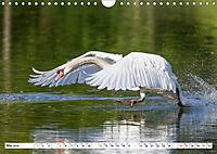 Tiere in Aktion (Wandkalender 2019 DIN A4 quer) - Produktdetailbild 5