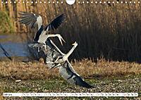 Tiere in Aktion (Wandkalender 2019 DIN A4 quer) - Produktdetailbild 7