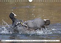 Tiere in Aktion (Wandkalender 2019 DIN A4 quer) - Produktdetailbild 6