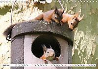 Tiere in Aktion (Wandkalender 2019 DIN A4 quer) - Produktdetailbild 4