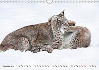 Tiere in Aktion (Wandkalender 2019 DIN A4 quer) - Produktdetailbild 12
