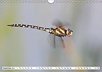 Tiere in Aktion (Wandkalender 2019 DIN A4 quer) - Produktdetailbild 9