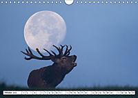 Tiere in Aktion (Wandkalender 2019 DIN A4 quer) - Produktdetailbild 10