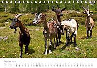 Tiere in Freiheit - Nutztiere auf der Alm (Tischkalender 2019 DIN A5 quer) - Produktdetailbild 1