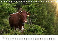 Tiere in Freiheit - Nutztiere auf der Alm (Tischkalender 2019 DIN A5 quer) - Produktdetailbild 4