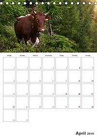 Tiere in Freiheit - Nutztiere auf der Alm (Tischkalender 2019 DIN A5 hoch) - Produktdetailbild 4