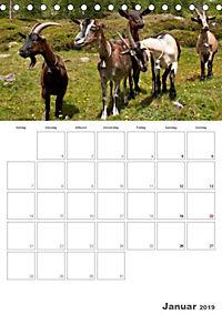 Tiere in Freiheit - Nutztiere auf der Alm (Tischkalender 2019 DIN A5 hoch) - Produktdetailbild 1
