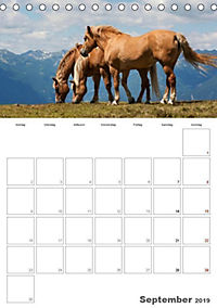 Tiere in Freiheit - Nutztiere auf der Alm (Tischkalender 2019 DIN A5 hoch) - Produktdetailbild 9