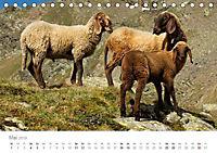 Tiere in Freiheit - Nutztiere auf der Alm (Tischkalender 2019 DIN A5 quer) - Produktdetailbild 5