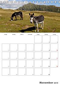 Tiere in Freiheit - Nutztiere auf der Alm (Tischkalender 2019 DIN A5 hoch) - Produktdetailbild 11