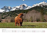 Tiere in Freiheit - Nutztiere auf der Alm (Wandkalender 2019 DIN A2 quer) - Produktdetailbild 6