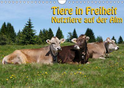 Tiere in Freiheit - Nutztiere auf der Alm (Wandkalender 2019 DIN A4 quer), Georg Niederkofler