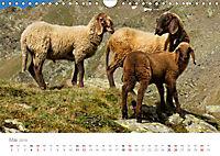 Tiere in Freiheit - Nutztiere auf der Alm (Wandkalender 2019 DIN A4 quer) - Produktdetailbild 5