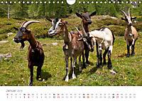 Tiere in Freiheit - Nutztiere auf der Alm (Wandkalender 2019 DIN A4 quer) - Produktdetailbild 1