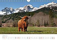Tiere in Freiheit - Nutztiere auf der Alm (Wandkalender 2019 DIN A4 quer) - Produktdetailbild 6