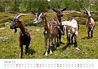 Tiere in Freiheit - Nutztiere auf der Alm (Wandkalender 2019 DIN A2 quer) - Produktdetailbild 1