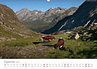 Tiere in Freiheit - Nutztiere auf der Alm (Wandkalender 2019 DIN A2 quer) - Produktdetailbild 9