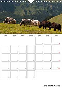 Tiere in Freiheit - Nutztiere auf der Alm (Wandkalender 2019 DIN A4 hoch) - Produktdetailbild 2