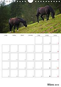 Tiere in Freiheit - Nutztiere auf der Alm (Wandkalender 2019 DIN A4 hoch) - Produktdetailbild 3