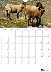Tiere in Freiheit - Nutztiere auf der Alm (Wandkalender 2019 DIN A4 hoch) - Produktdetailbild 5