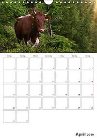 Tiere in Freiheit - Nutztiere auf der Alm (Wandkalender 2019 DIN A4 hoch) - Produktdetailbild 4