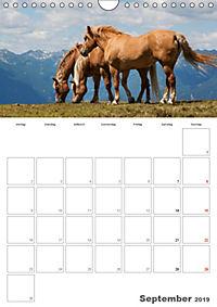 Tiere in Freiheit - Nutztiere auf der Alm (Wandkalender 2019 DIN A4 hoch) - Produktdetailbild 9