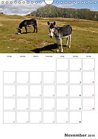 Tiere in Freiheit - Nutztiere auf der Alm (Wandkalender 2019 DIN A4 hoch) - Produktdetailbild 11