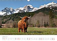 Tiere in Freiheit - Nutztiere auf der Alm (Wandkalender 2019 DIN A3 quer) - Produktdetailbild 6