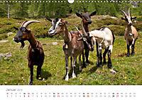 Tiere in Freiheit - Nutztiere auf der Alm (Wandkalender 2019 DIN A3 quer) - Produktdetailbild 1