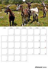 Tiere in Freiheit - Nutztiere auf der Alm (Wandkalender 2019 DIN A3 hoch) - Produktdetailbild 1