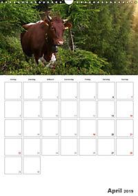 Tiere in Freiheit - Nutztiere auf der Alm (Wandkalender 2019 DIN A3 hoch) - Produktdetailbild 4