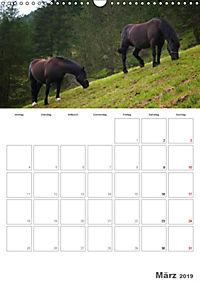 Tiere in Freiheit - Nutztiere auf der Alm (Wandkalender 2019 DIN A3 hoch) - Produktdetailbild 3