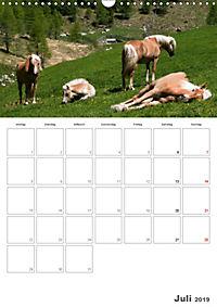Tiere in Freiheit - Nutztiere auf der Alm (Wandkalender 2019 DIN A3 hoch) - Produktdetailbild 7