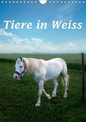 Tiere in Weiß (Wandkalender 2019 DIN A4 hoch), Liselotte Brunner-Klaus