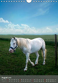 Tiere in Weiß (Wandkalender 2019 DIN A4 hoch) - Produktdetailbild 4