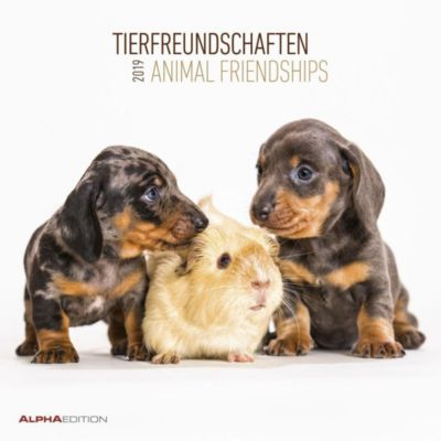 Tierfreundschaften / Animal Friendships 2019, ALPHA EDITION