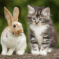 Tierfreundschaften / Animal Friendships 2019 - Produktdetailbild 4