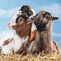 Tierfreundschaften / Animal Friendships 2019 - Produktdetailbild 3