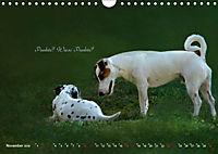 Tierisch nachgefragt (Wandkalender 2019 DIN A4 quer) - Produktdetailbild 11