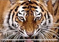Tierische Momentaufnahmen (Wandkalender 2019 DIN A2 quer) - Produktdetailbild 2