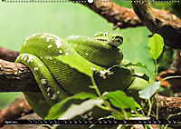Tierische Momentaufnahmen (Wandkalender 2019 DIN A2 quer) - Produktdetailbild 4