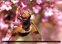 Tierische Momentaufnahmen (Wandkalender 2019 DIN A2 quer) - Produktdetailbild 6