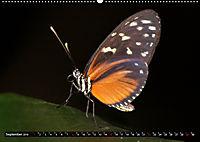Tierische Momentaufnahmen (Wandkalender 2019 DIN A2 quer) - Produktdetailbild 9
