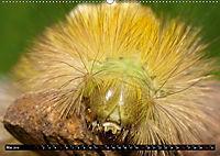 Tierische Momentaufnahmen (Wandkalender 2019 DIN A2 quer) - Produktdetailbild 5