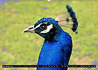 Tierische Momentaufnahmen (Wandkalender 2019 DIN A2 quer) - Produktdetailbild 11